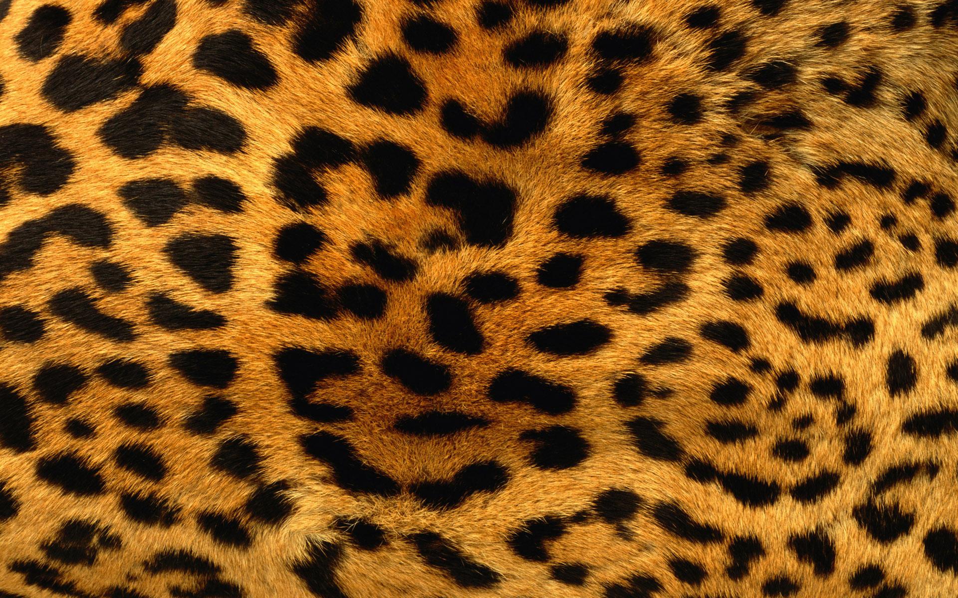 glitter leopard print wallpaper