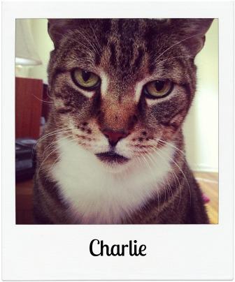 Charlie_sp